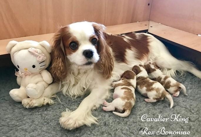 cuccioli-rexbononiae