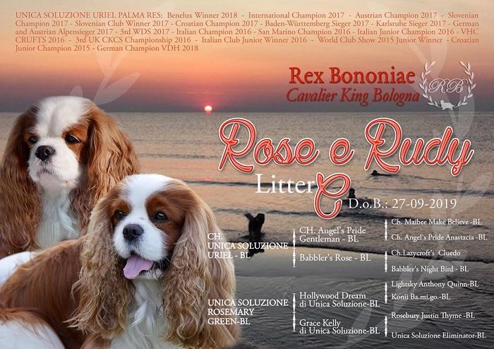 Rudy-Rose-cucciolata-cavalier